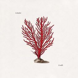 copertina di corallo su flaneri
